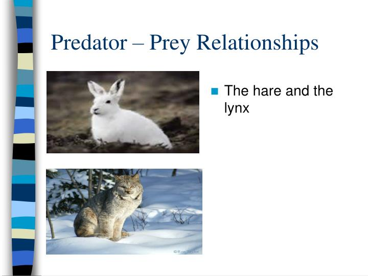 Predator – Prey Relationships