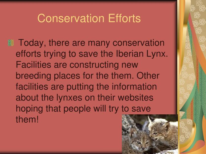 Conservation Efforts