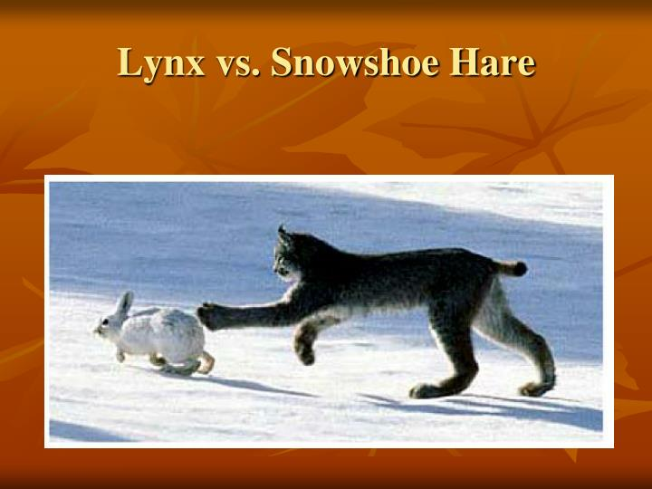 Lynx vs. Snowshoe Hare
