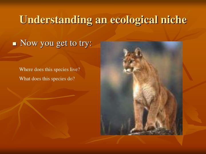 Understanding an ecological niche