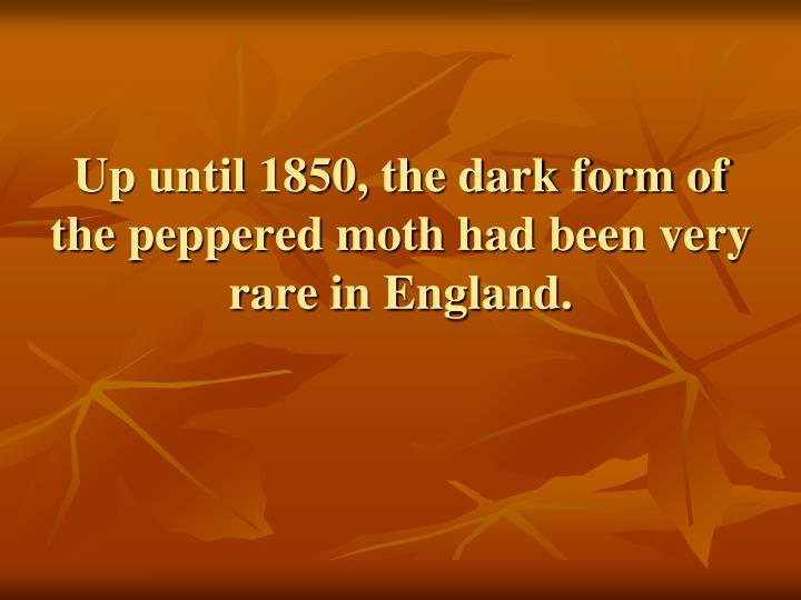 Up until 1850, the dark form of the peppered moth had been very rare in England.
