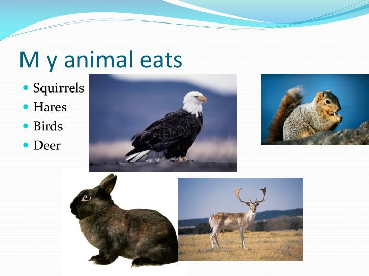 M y animal eats