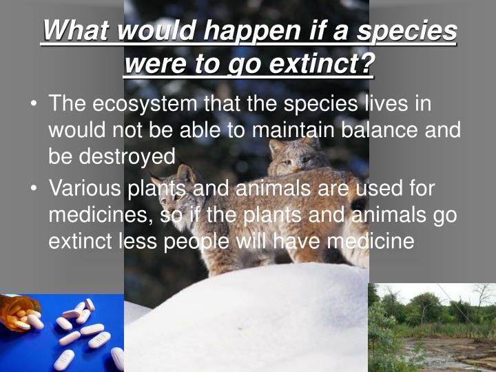 What would happen if a species were to go extinct