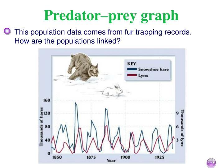Predator–prey graph