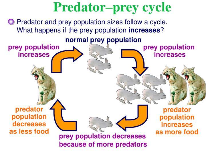 prey population