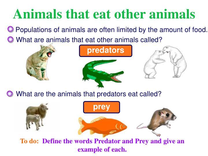 Animals that eat other animals