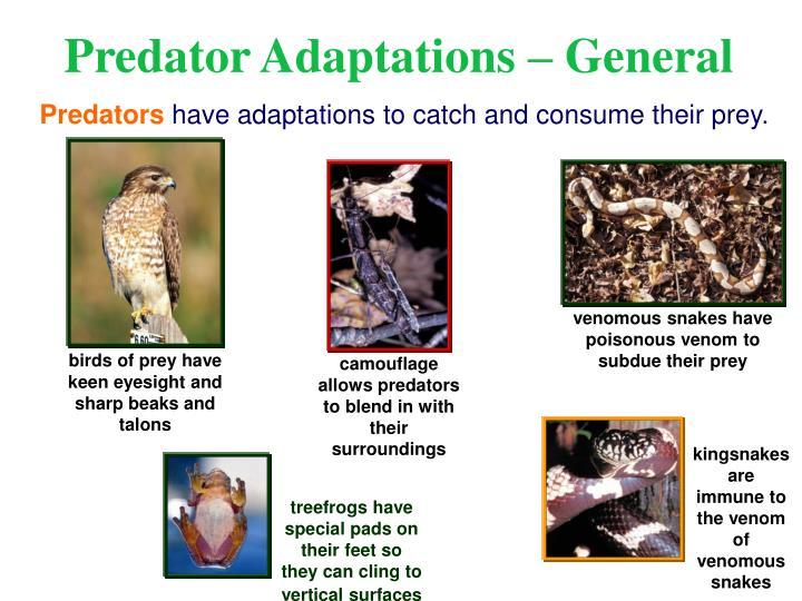venomous snakes have poisonous venom to subdue their prey