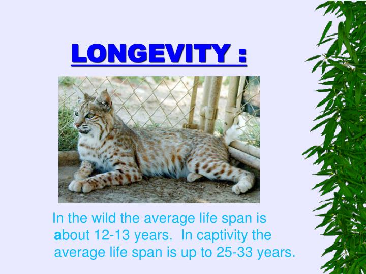 In the wild the average life span is