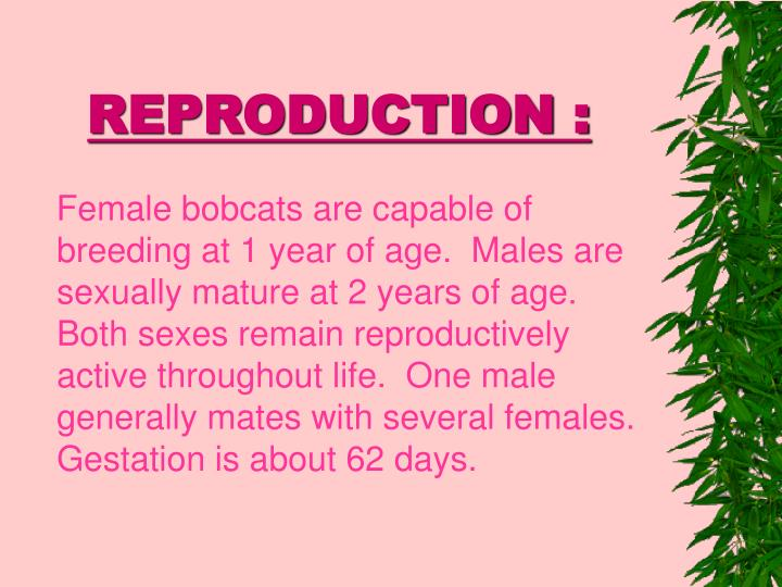 REPRODUCTION :
