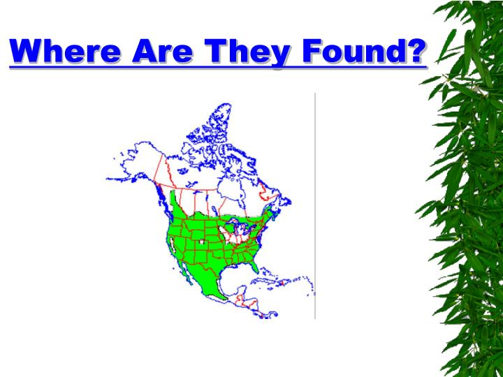 Where Are They Found?