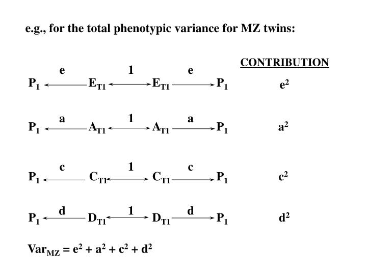 e.g., for the total phenotypic variance for MZ twins: