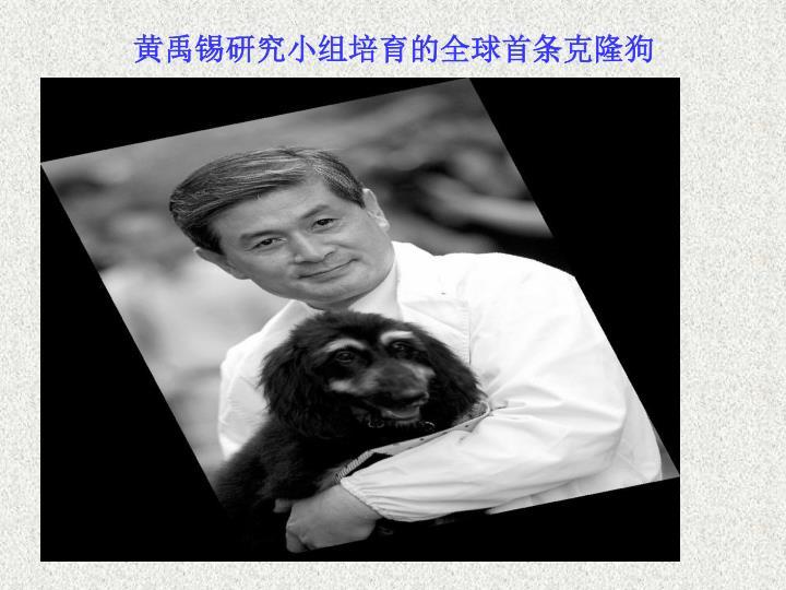 黄禹锡研究小组培育的全球首条克隆狗