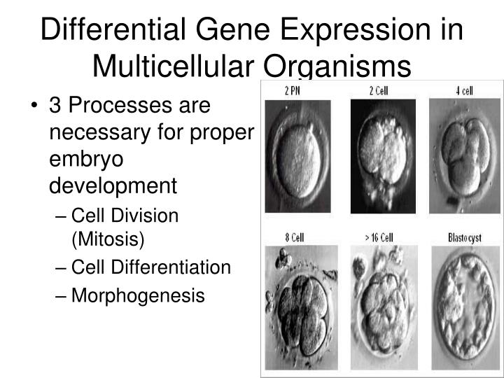 Differential Gene Expression in Multicellular Organisms