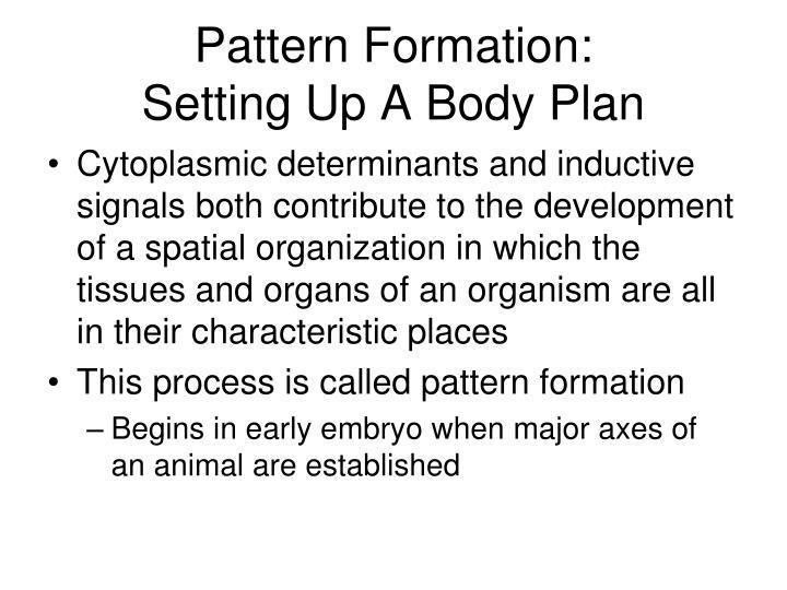 Pattern Formation: