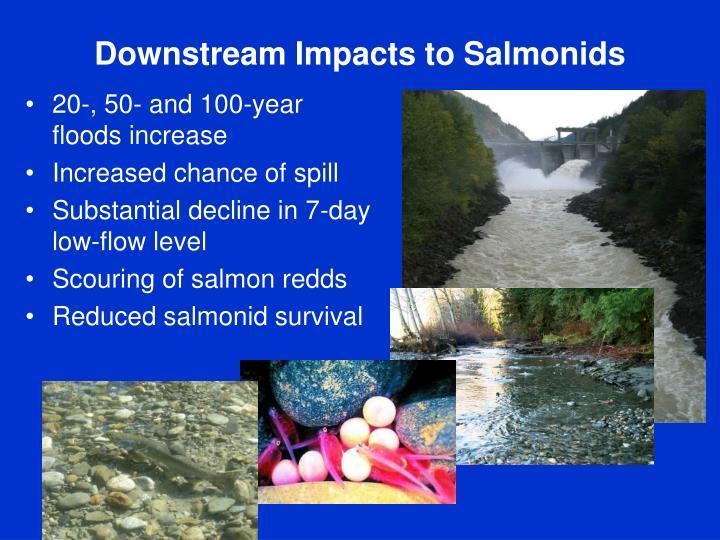 Downstream Impacts to Salmonids