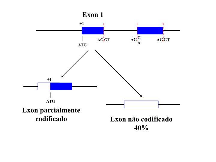 Exon 1