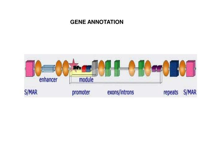 GENE ANNOTATION