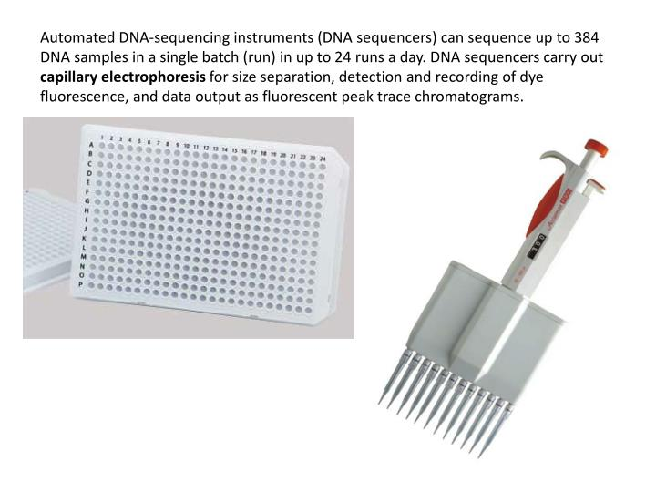 Automated DNA-sequencing instruments (DNA sequencers) can sequence up to 384 DNA samples in a single batch (run) in up to 24 runs a day. DNA sequencers carry out
