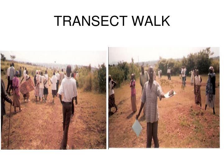 TRANSECT WALK