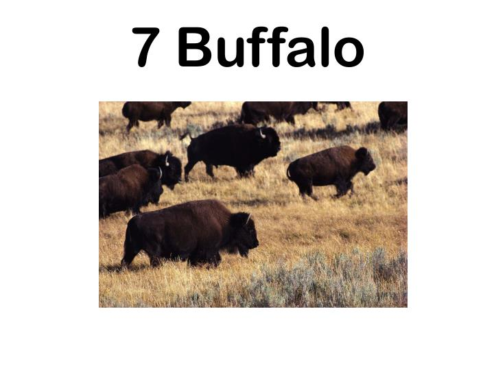 7 Buffalo