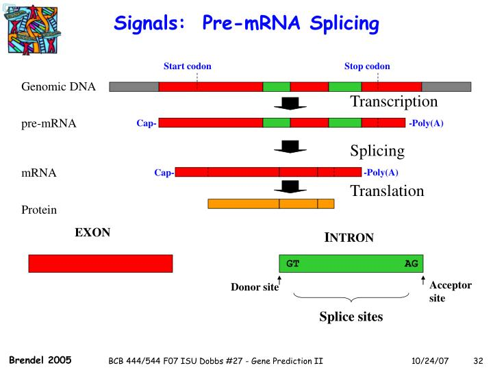 Signals:  Pre-mRNA Splicing