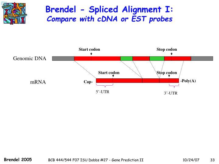 Brendel - Spliced Alignment I: