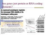are genes just protein or rna coding elements