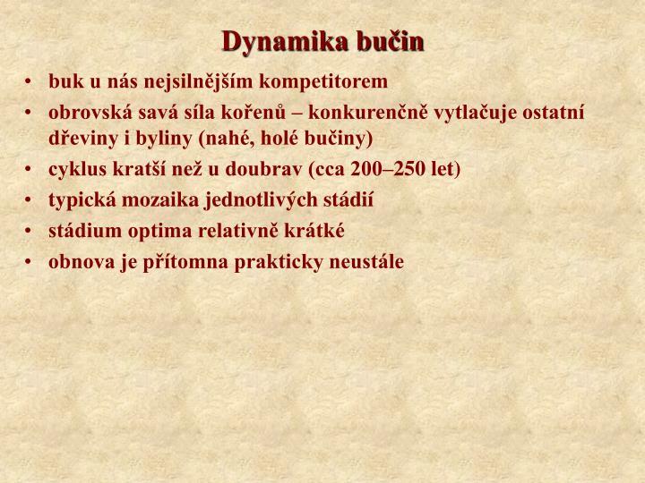 Dynamika bučin