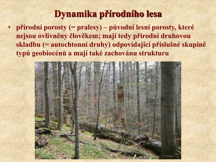 Dynamika p rodn ho lesa
