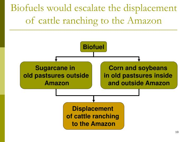 Biofuels would escalate the displacement of cattle ranching to the Amazon
