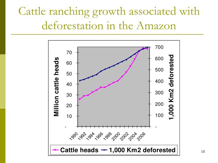 Cattle ranching growth associated with deforestation in the Amazon