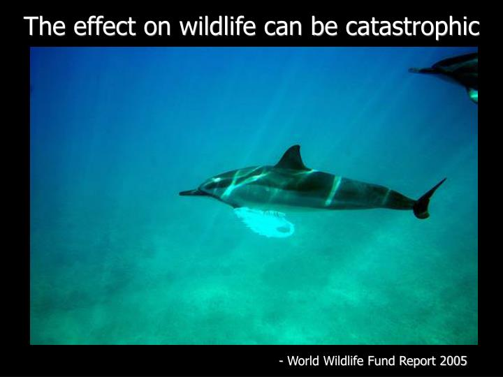 The effect on wildlife can be catastrophic