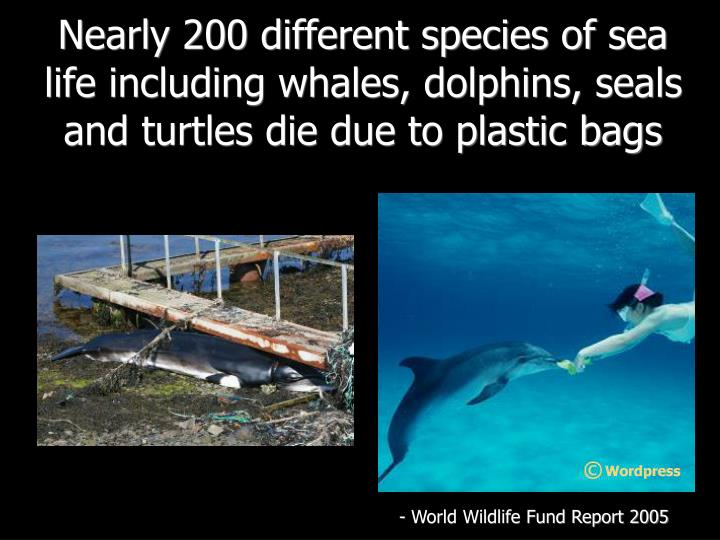 Nearly 200 different species of sea life including whales, dolphins, seals and turtles die due to plastic bags