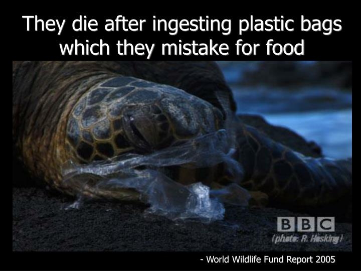 They die after ingesting plastic bags which they mistake for food