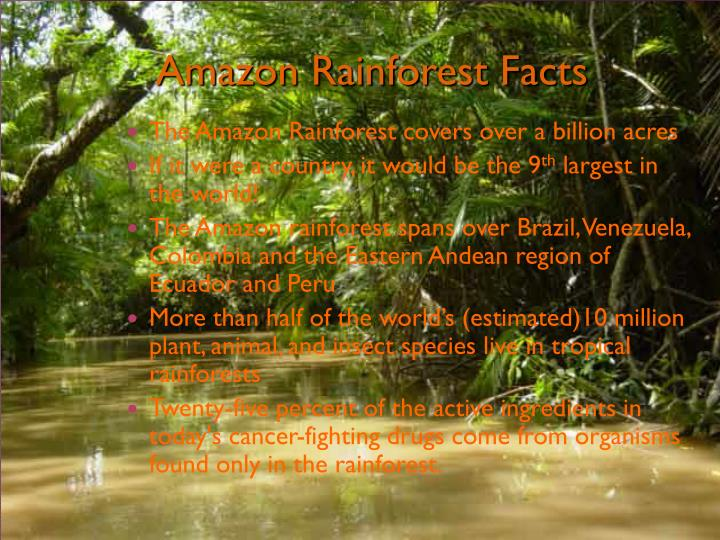 Amazon rainforest facts