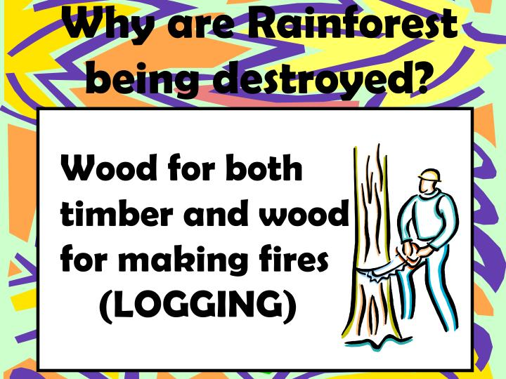 Why are Rainforest being destroyed?