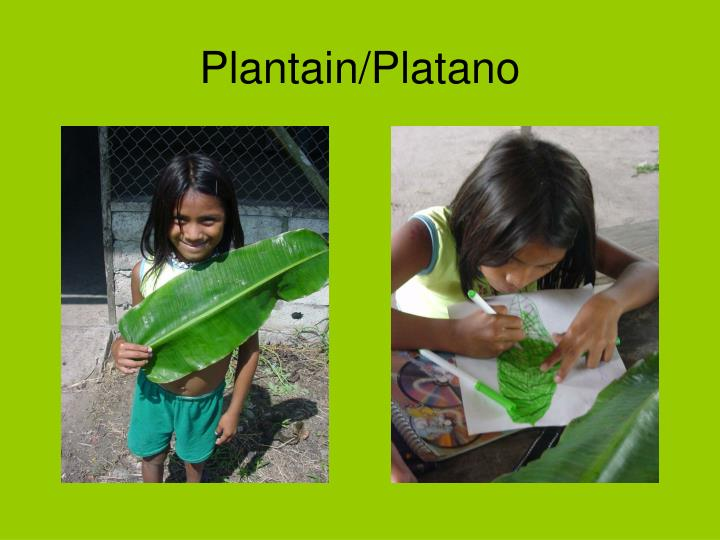 Plantain platano