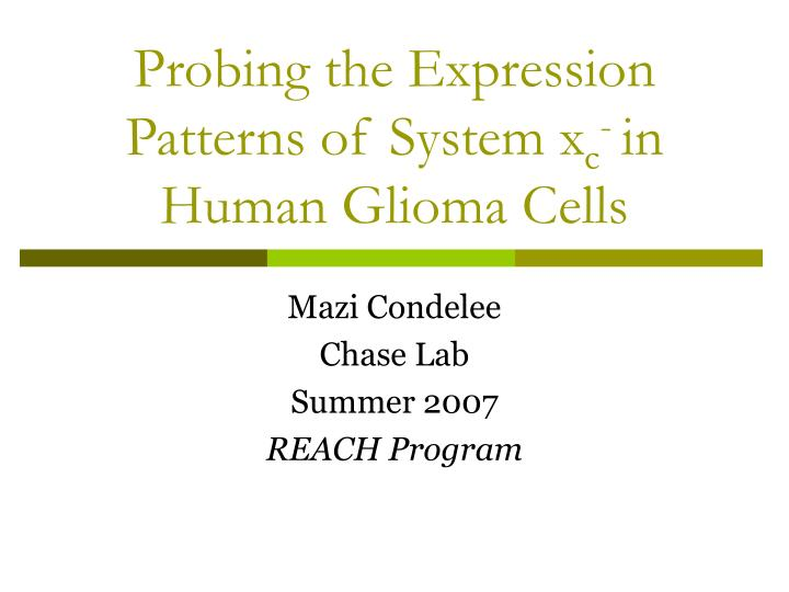 probing the expression patterns of system x c in human glioma cells