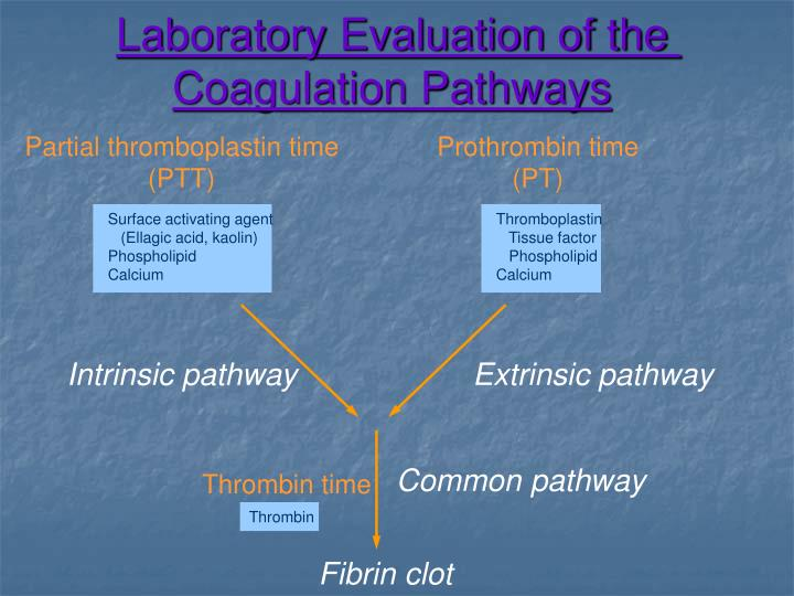Laboratory Evaluation of the Coagulation Pathways
