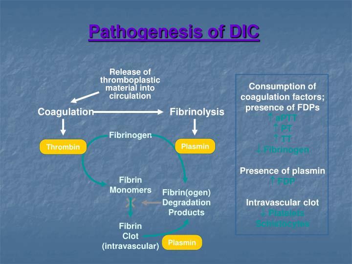 Pathogenesis of DIC