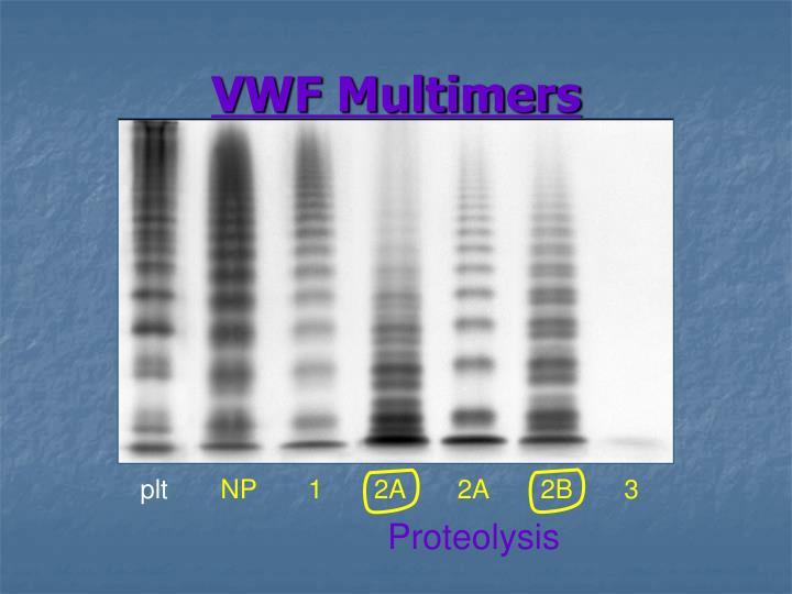 VWF Multimers