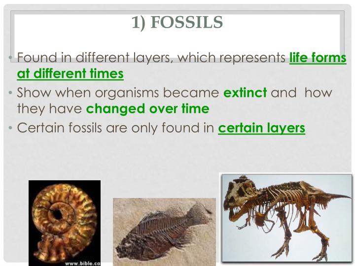 1) Fossils