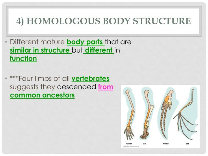 4) Homologous Body Structure