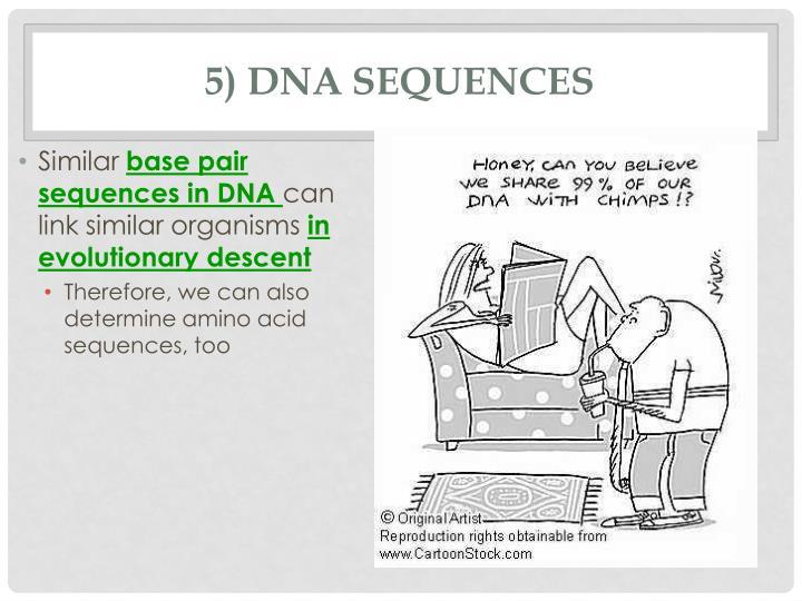 5) DNA Sequences