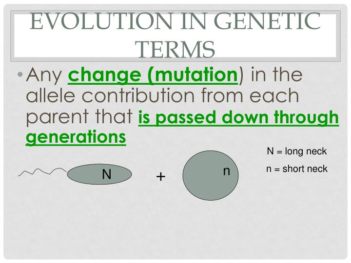 Evolution in Genetic terms