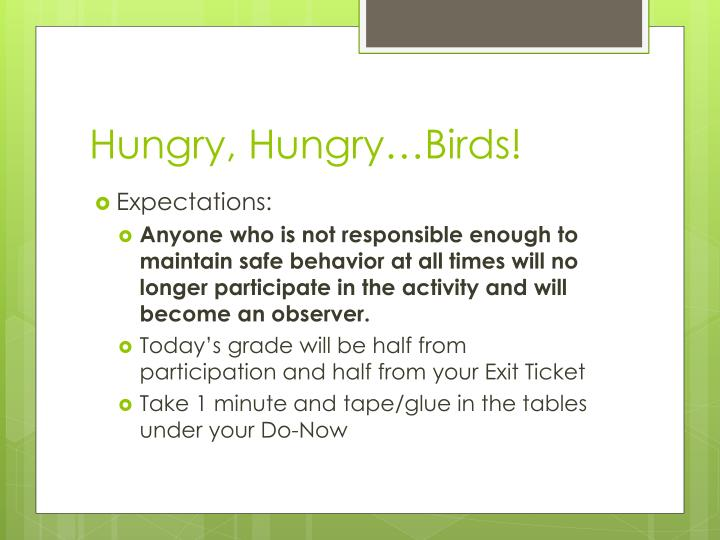 Hungry, Hungry…Birds!