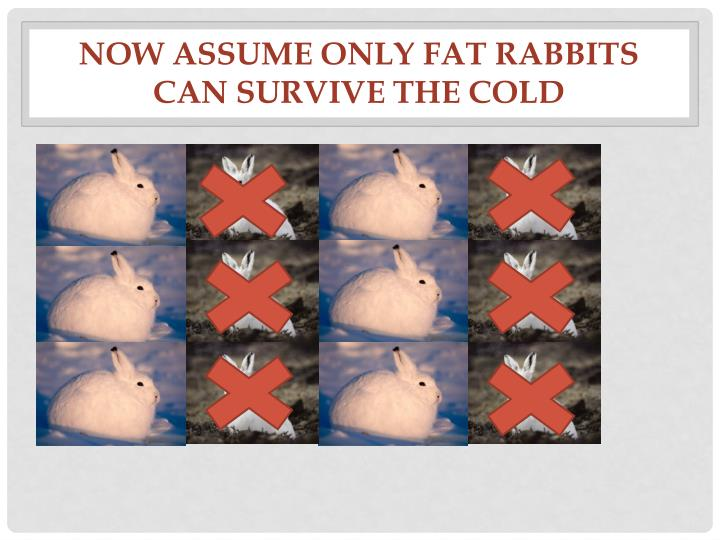 Now assume only fat rabbits can survive the cold