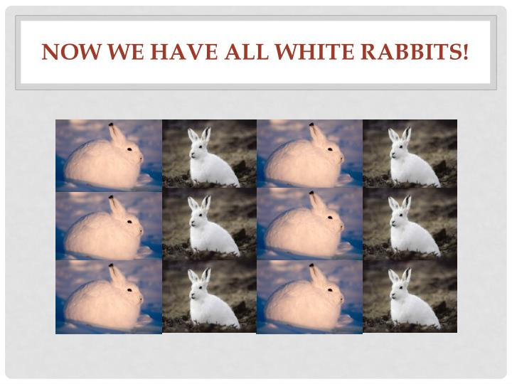 Now we have ALL white rabbits!
