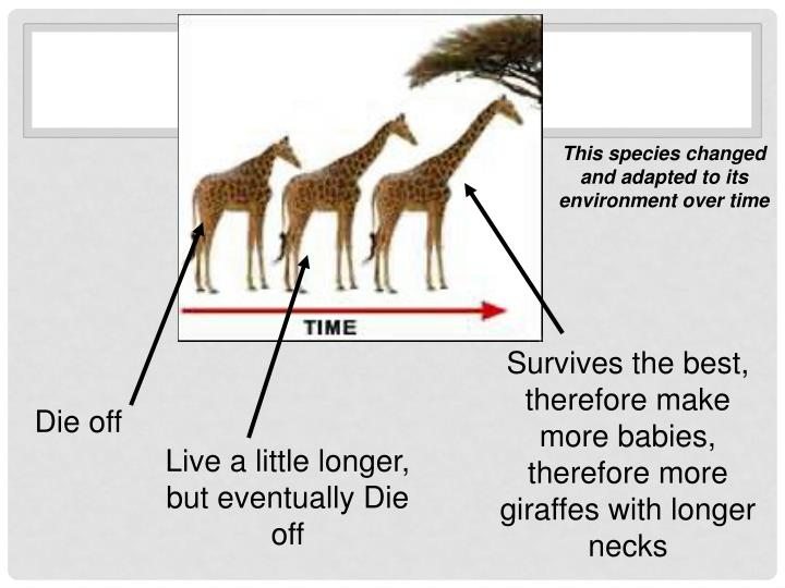 This species changed and adapted to its environment over time