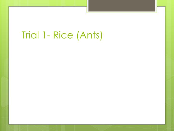 Trial 1- Rice (Ants)